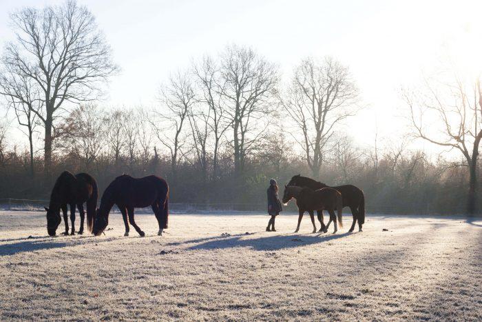 Hobo Schuh Shooting Winter Pferdewiese Hobos