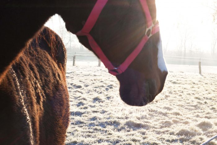 Hobo Schuh Shooting Pferd im Winter Pferdewiese