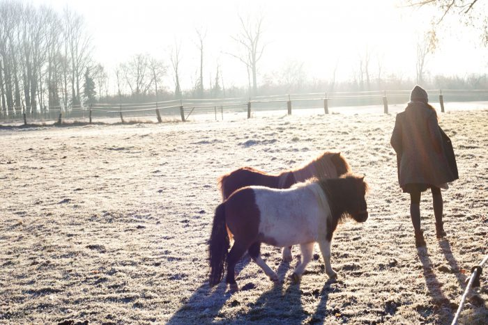 Hobo Schuh Shooting Pferde im Frost auf Wiese